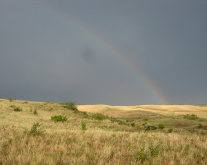 Rainbow in the steppe. Alexey Burkovsky
