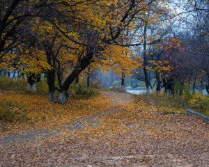 Scherbakov's park. Indian summer. Oleh Zack