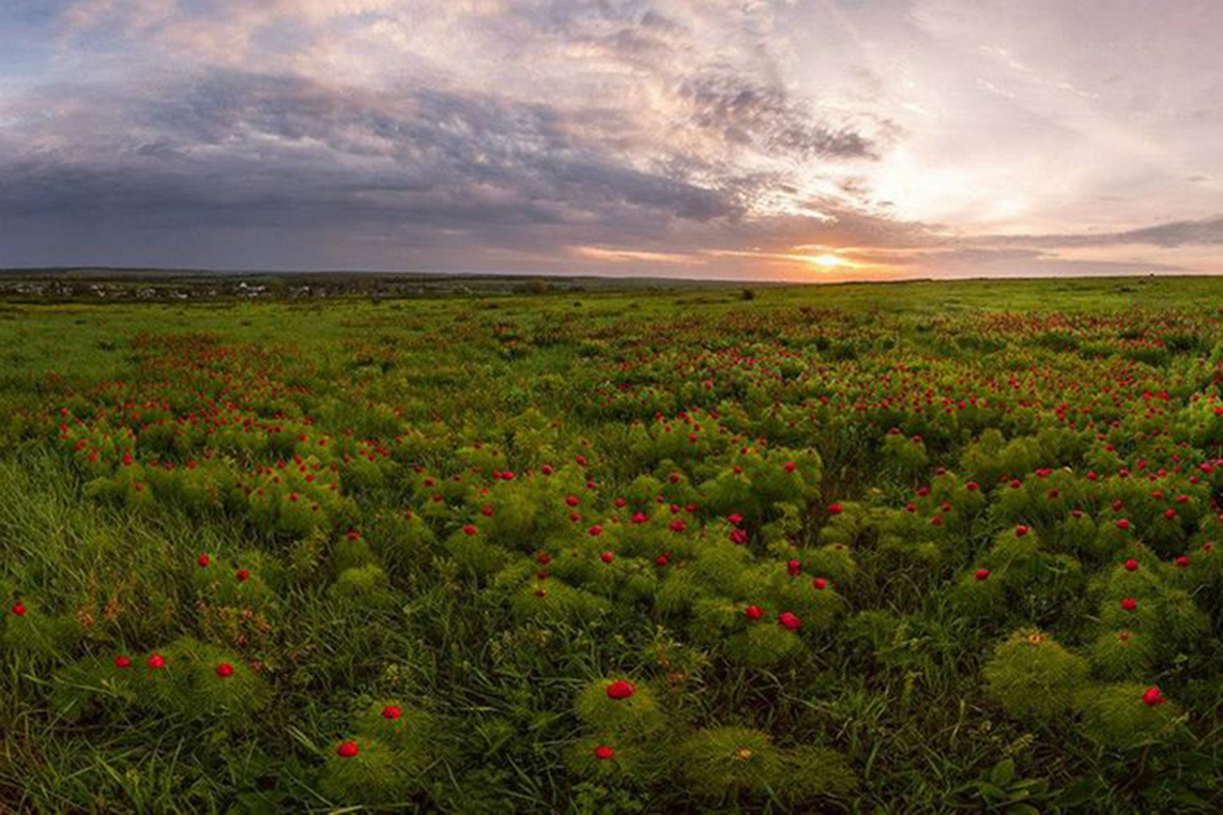 The steppe is lit by the red. Dmitry Balkhovitin