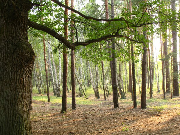It takes 15 years to restore the forests in Luhansk region after ATO